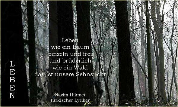 Gedicht baum wald
